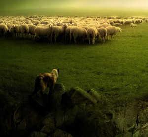 Паствище овец
